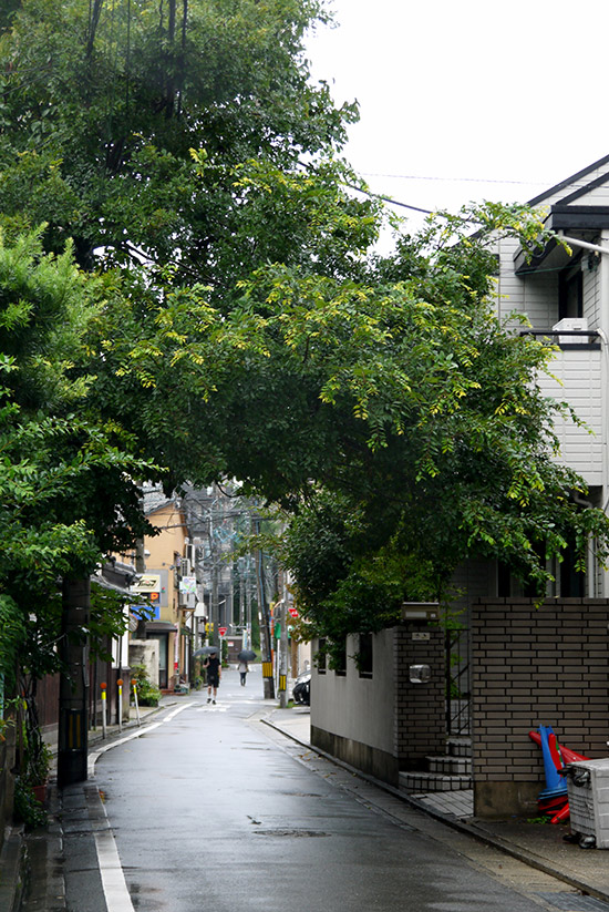 Fukuoka, street with trees in Kego